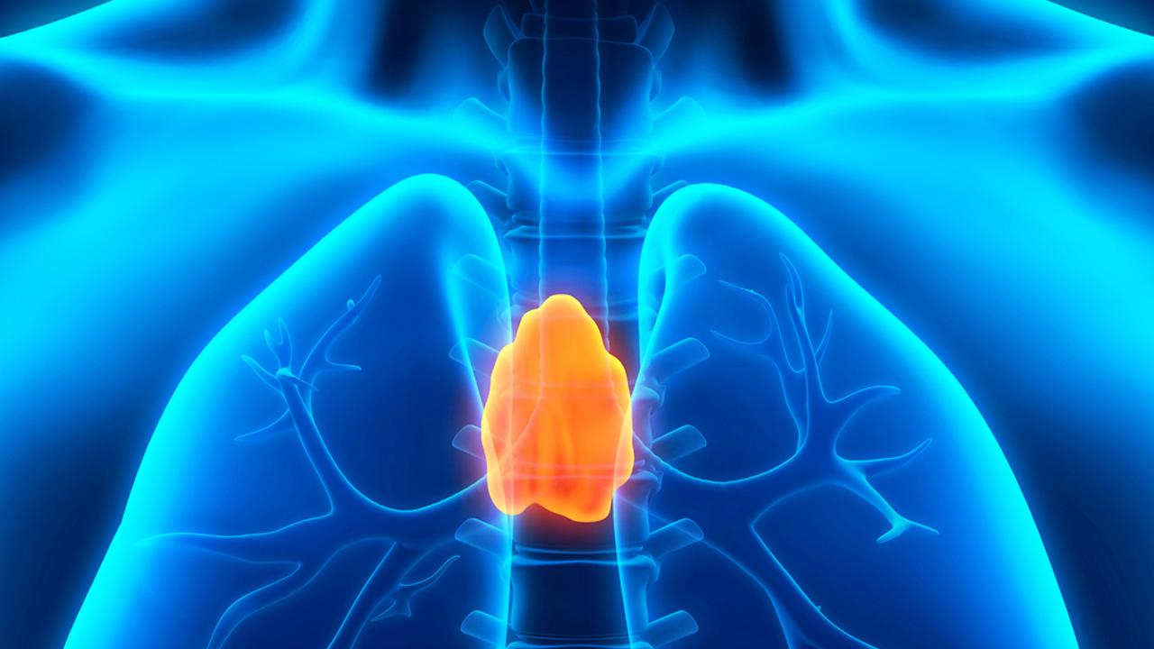 """Résultat de recherche d'images pour """"thymus"""""""