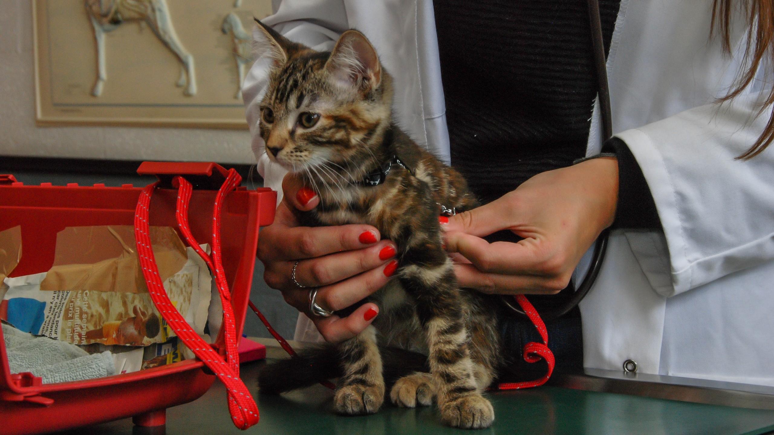 chat allemand gratuit sans inscription